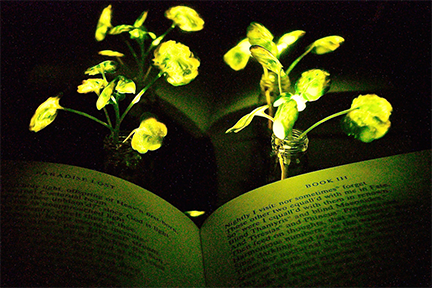 MIT Glowing Plants Web